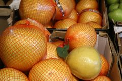 Close up of Ripe pomelo or thai grapefruit on the counter market. Stall. Fresh citrus fruit stock images