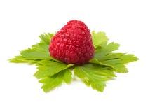 Close up of a ripe rapsberry Stock Image