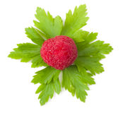 Close up of a ripe rapsberry Stock Images