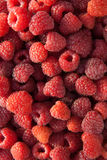 Close up of the ripe raspberry as background. Lots of red ripe raspberries as background. Close up of fresh organic sweet berries Royalty Free Stock Images