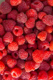 Close up of the ripe raspberry as background. Lots of red ripe raspberries as background. Close up of fresh organic sweet berries Stock Images