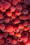 Close up of the ripe raspberry as background. Lots of red ripe raspberries as background. Close up of fresh organic sweet berries Stock Photos