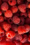 Close up of the ripe raspberry as background. Lots of red ripe raspberries as background. Close up of fresh organic sweet berries Royalty Free Stock Photo
