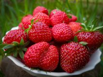 Close-up of ripe and sweet strawberry. Many berries lie on a white plate. Natural sunlight royalty free stock images