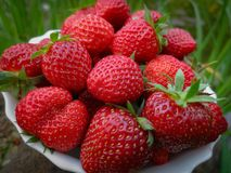 Close-up of ripe and sweet strawberry. Many berries lie on a white plate. Natural sunlight royalty free stock image