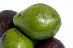 Close Up of Ripe and Unripe Organic Avocado Pears Royalty Free Stock Image
