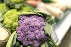 Close up of ripe and vibrant purple cauliflowers in front of gre Royalty Free Stock Images