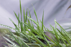 Close up of riverbank. Close up of green grass on riverbank with water seen as blur in background Royalty Free Stock Image