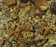 Close-up of riverbed through clear water flowing Royalty Free Stock Photo