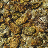 Close-up of riverbed through clear water flowing Stock Photo