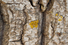 Close up of rock with fungus. Stock Photography