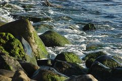 Close-up of rocks with green moss on, under afternoon sunlight in Tenerife, Canary Islands, Spain stock photography