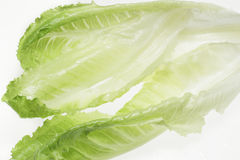Close-up of romaine lettuce leaves, backlit Royalty Free Stock Image