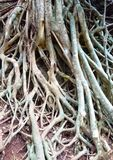 Close up of roots of a tree stock photography