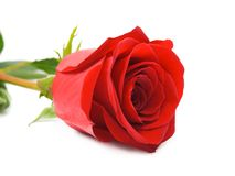 Close-up of rose Stock Photography