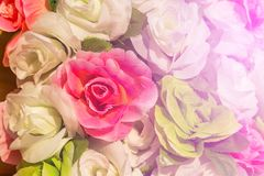 Close up rose fabric artificial wedding flowers backdrop decoration. Close up colorful of soft rose fabric artificial wedding flowers backdrop decoration Stock Images