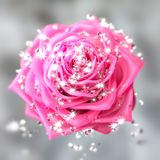 Close-up on a rose flower with diamonds royalty free illustration
