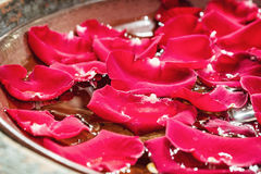 Close up of rose petals float on the water Stock Photos