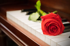 Close-up of rose on piano. vintage filter effect. in church. ใ Stock Photos