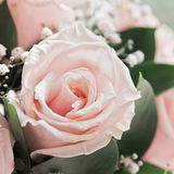 Close-up of the rosebud Stock Photography