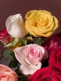 Close-Up Roses Royalty Free Stock Images