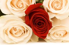 Close up of roses. Close up of four white and one red roses Stock Image