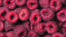 Close up rotation loopable berry. Fresh, juicy raspberry background, ripe. Macro red raspberries fruit. Fresh raspberry. Close up berry. Fresh, juicy raspberry stock video