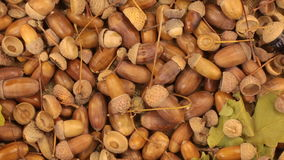 Close-up. Rotation of oak acorns with green leaves. View from above stock footage