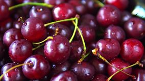 Close-up rotation of red ripe cherry fruit.  stock video footage
