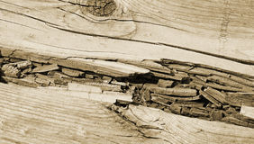 Close up of rotted wood along boardwalk - sepia tone Royalty Free Stock Photos