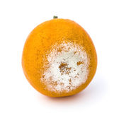Close up of rotten orange Stock Photography