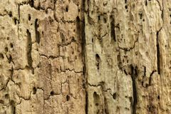 Close-up of rotting tree stump texture stock image