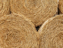 Close up of round hay bails Royalty Free Stock Photo