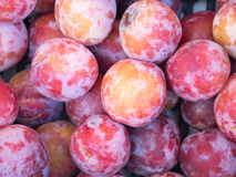 Close-up of round plums Royalty Free Stock Photography