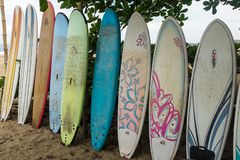 A close up of a row of multi-coloured surf long boards lined up for hire on a beach at Puerto Viejo de Talamanca in royalty free stock photos