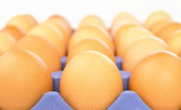 Raw brown chicken eggs in container. Close up row of raw brown chicken eggs in purple container Royalty Free Stock Photo