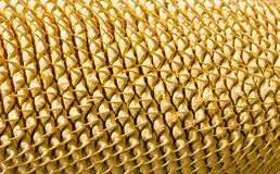Close-up Rows Of Cycad Cone Stock Photography