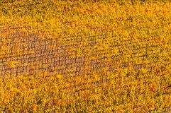 Close up the rows of vineyards. Autumn landscape with colorful vineyards. Chianti, Italy.  stock images