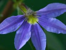 close-up roxo da flor imagem de stock