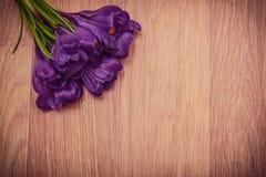 Close-up roxo dos açafrões Imagem de Stock