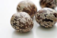 Close up of rubber seeds stock photos