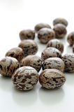 Close up of rubber seeds Royalty Free Stock Photos