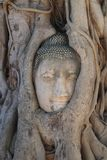 Close-up ruined Buddha head statue trapped between Tree roots at historical park, travel destination at Ayuthaya provice, Thailand Royalty Free Stock Photography