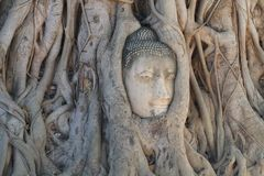 Close-up ruined Buddha head statue trapped between Tree roots at historical park, travel destination at Ayuthaya provice, Thailand Royalty Free Stock Images