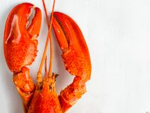 Rustic cooked boiled red lobster Royalty Free Stock Image