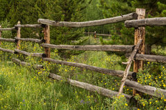 Close Up Rustic Fence and Wildflowers. An old rustic fence surrounded by wildflowers in Colorado Royalty Free Stock Images