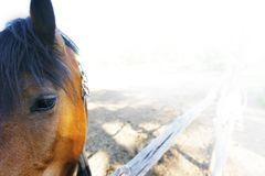 Close up of sad horse in corral. Partly isolated over white royalty free stock photography