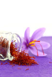 Close up of saffron flower Stock Image