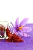 Close up of saffron flower Stock Image