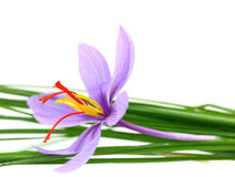 Close up of saffron flower Royalty Free Stock Photography